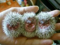 look at those little feetsies!