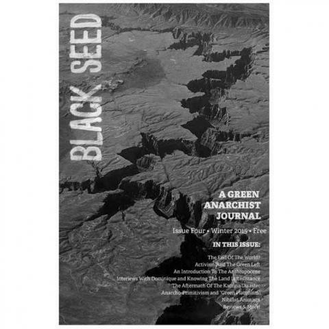 black_seed_4